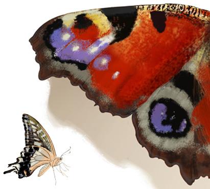 Kolekcja motyli APIA - lookbook lato 2018